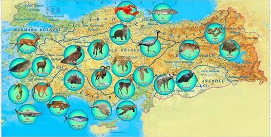 THE ENVIRONMENTAL AND BIODIVERSITY ADVANTAGE OF TURKEY